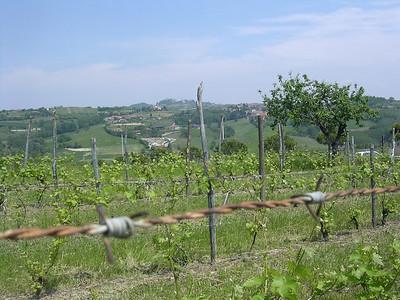 Coconato Maggio 2006