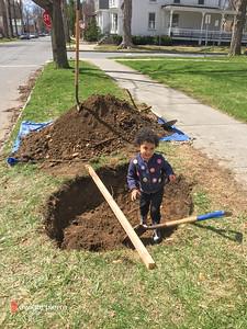2015 . Sustainable Saratoga 2015 Spring Tree Planting
