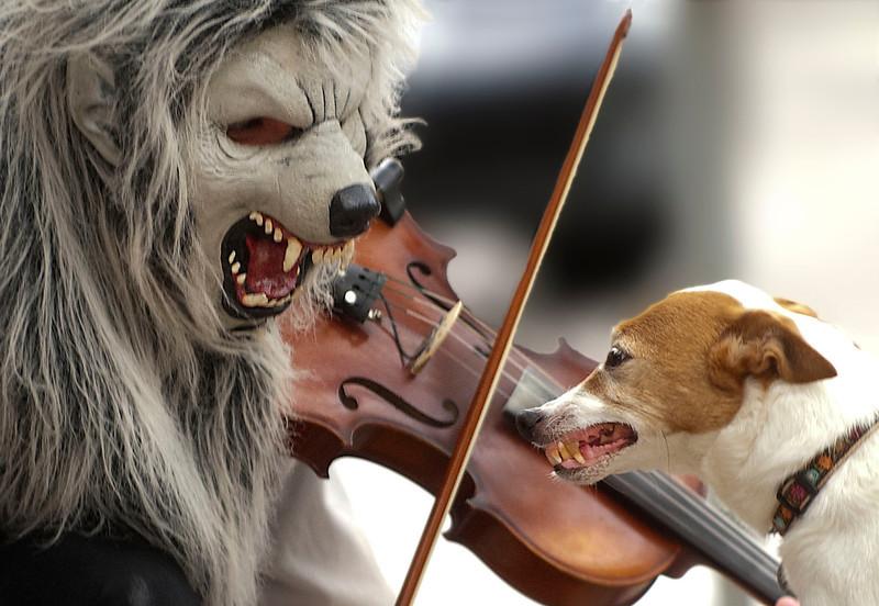 Violin Monster Meets Jack Russell Terrier