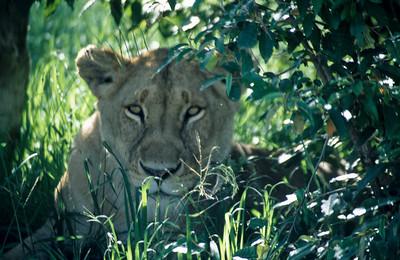 Kenia & Tansania 1996