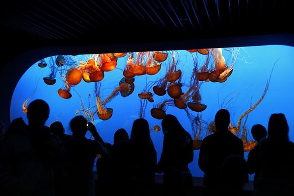 100404_MontereyAquarium