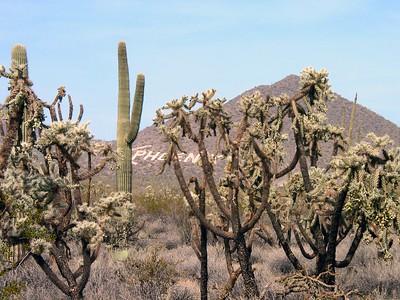 2003-02 Arizona Desert