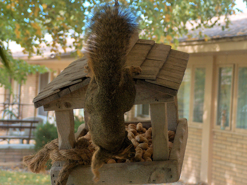Montana the Squirrel wisperer 3.jpg