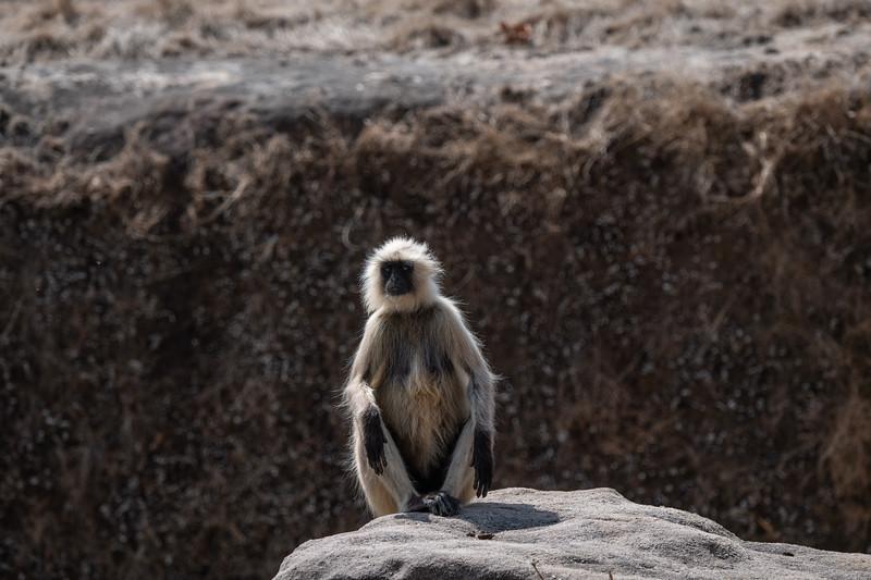 India_April_2019-3016.jpg