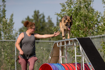 Whitehorse Woofers Agility 2021