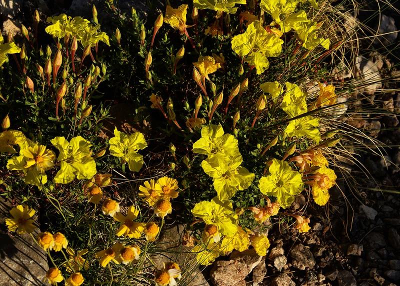 NEA_0845-7x5-Flowers.jpg