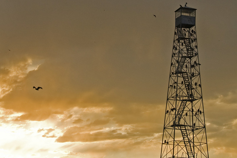 A lookout tower on the Malheur Wildlife Reserve at sunset.  The birds are mostly vultures with a mix of hawks and eagles.