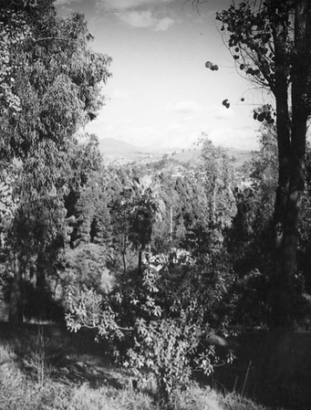1937, Tree Filled View