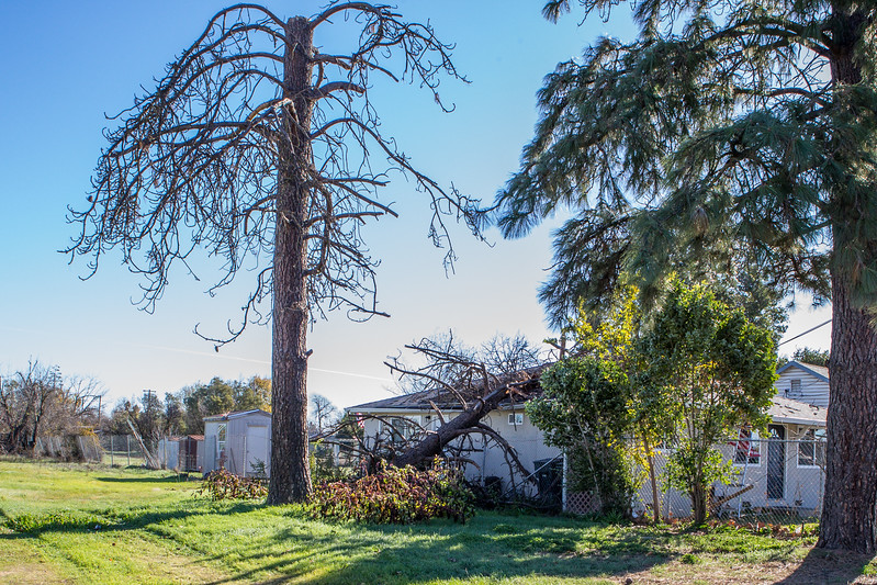 5671 Wallace Ave - Tree 1030am 12 16 2017 Extremly Windy Conditions-11.jpg