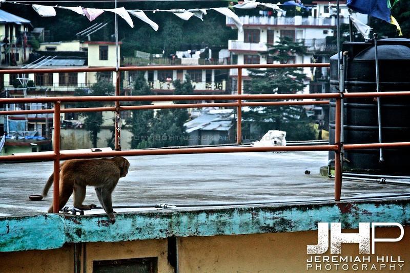 """Rooftop Showdown"", Dharamsala, Himichal Pradesh, India, 2007 Print IND399-056"