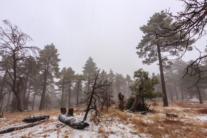 January 2018 Mount Laguna Snowstorm