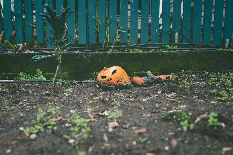 Death of a Pumpkin Cat