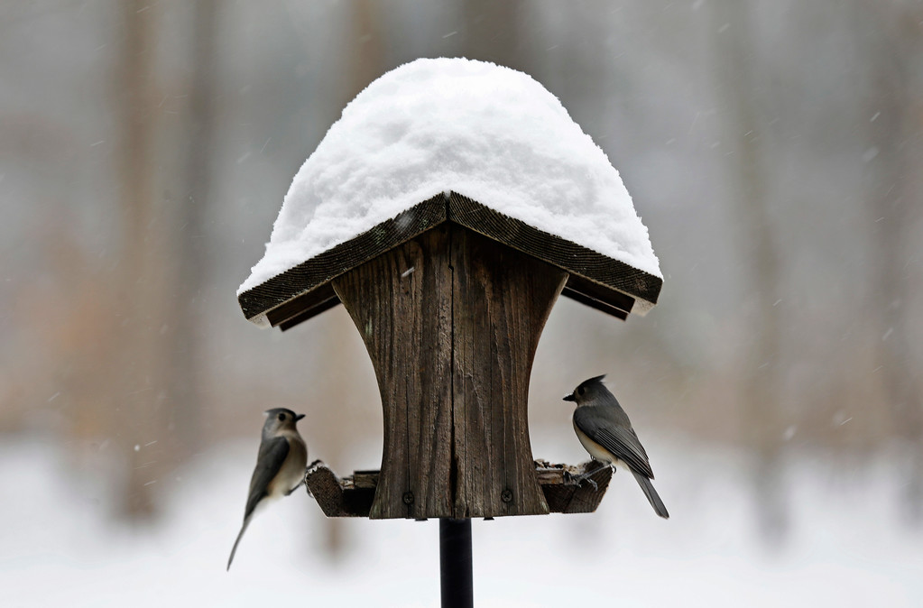 . Birds gather under a feeder for food and shelter as snow from a winter storm accumulates near Hillsborough, N.C., Saturday, Jan. 7, 2017. (AP Photo/Gerry Broome)