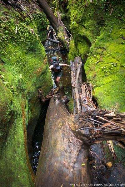 Lauren at the foot of a log climb