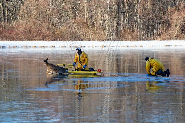 Glastonbury, Ct Deer ice rescue 1/22/20