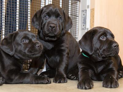 Ellie's Puppies