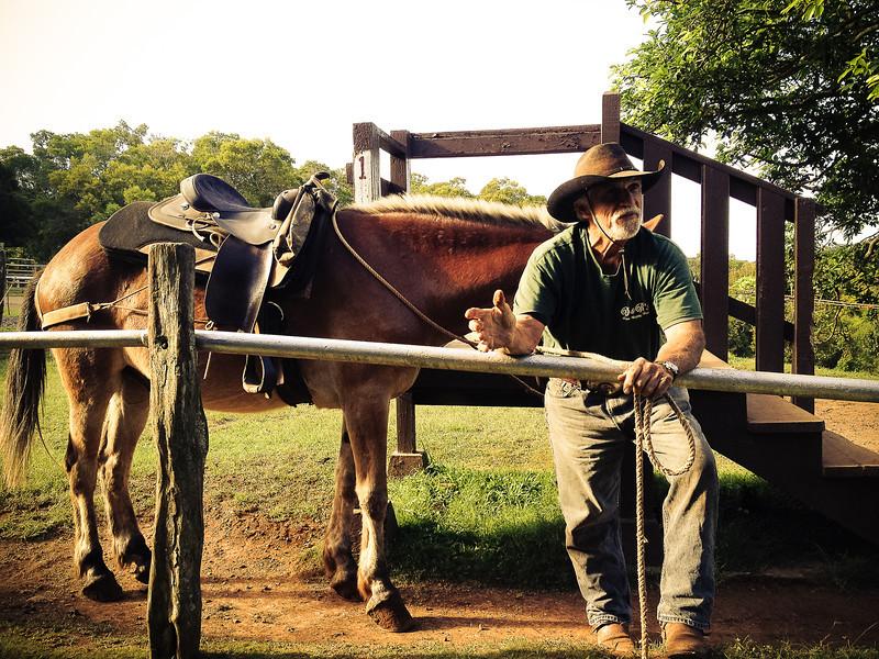 mule cowboy.jpg