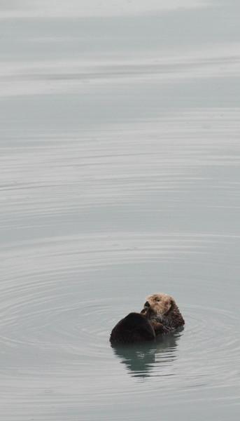 Kenai-Fjords-33.jpg