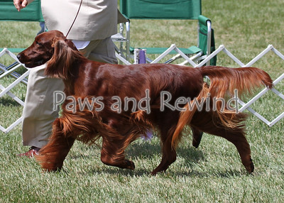 Canine Events 2013