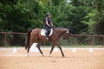 Horse 244