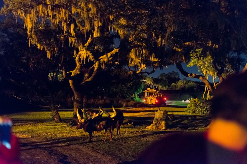Kilimanjaro Safaris at Night - Plains - Disney's Animal Kingdom, Walt Disney World