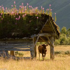 Landbruksmuseet-2012