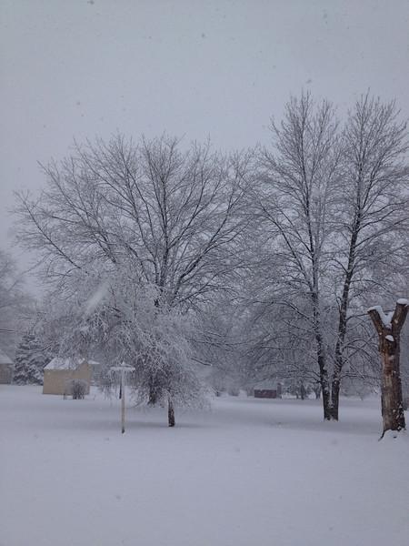 Winter Storm in my back yard 02/08/13.