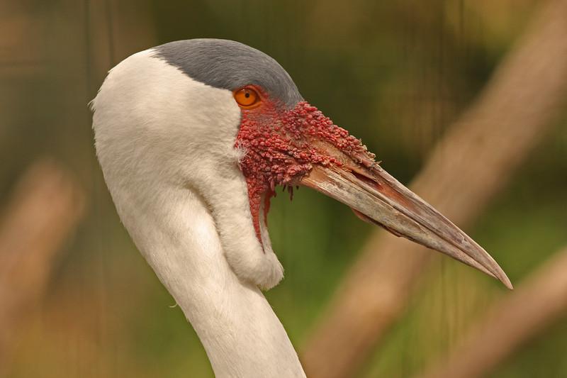 WB~Fort Worth Zooafricancrane1280.jpg