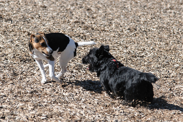 MacDuff and Laddie at the dog park
