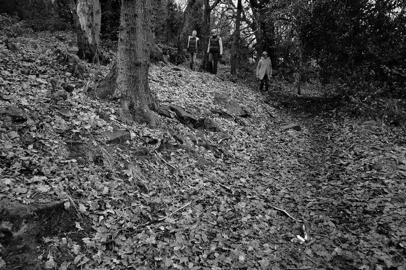 Calverley woods