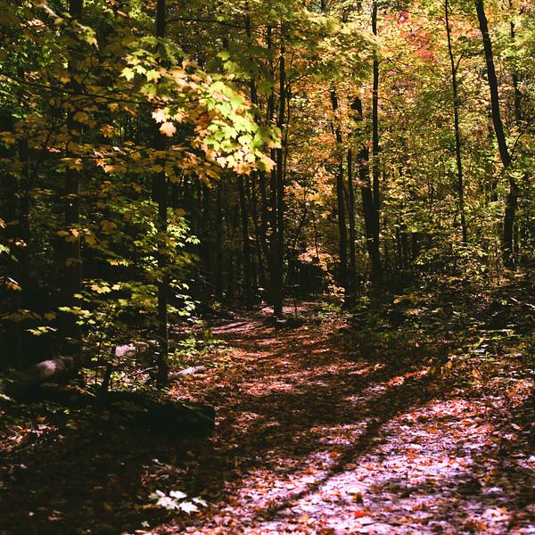 Autumn Hike 120 Film-00027.jpg