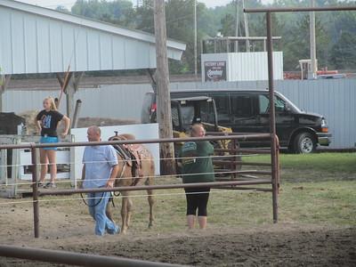 2017 Benton County Open Horse Show