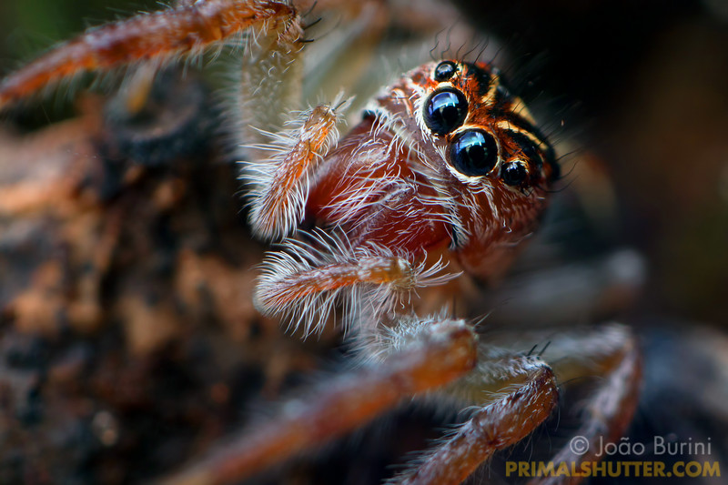 Details of a jumping spider