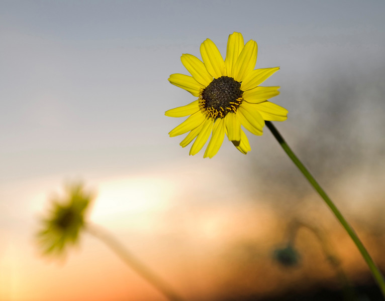 wildflower-1079089833-o.jpg