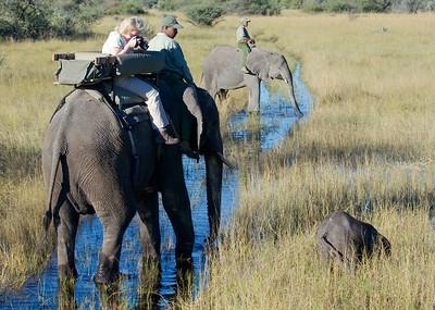 On Safari at Abu Camp, Botswana
