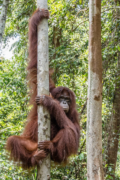 Borneo-2231.jpg