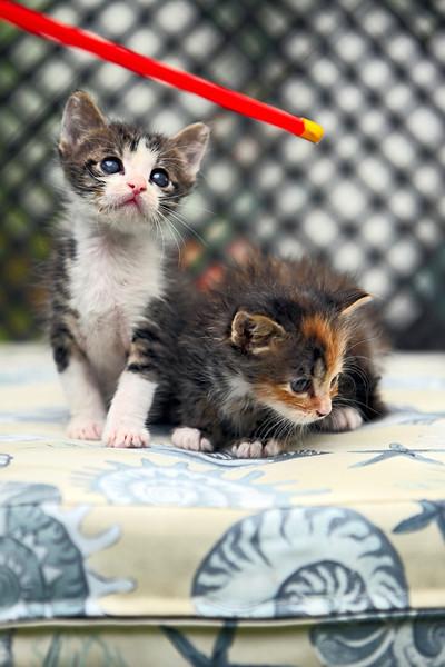 kittens_013-1.jpg