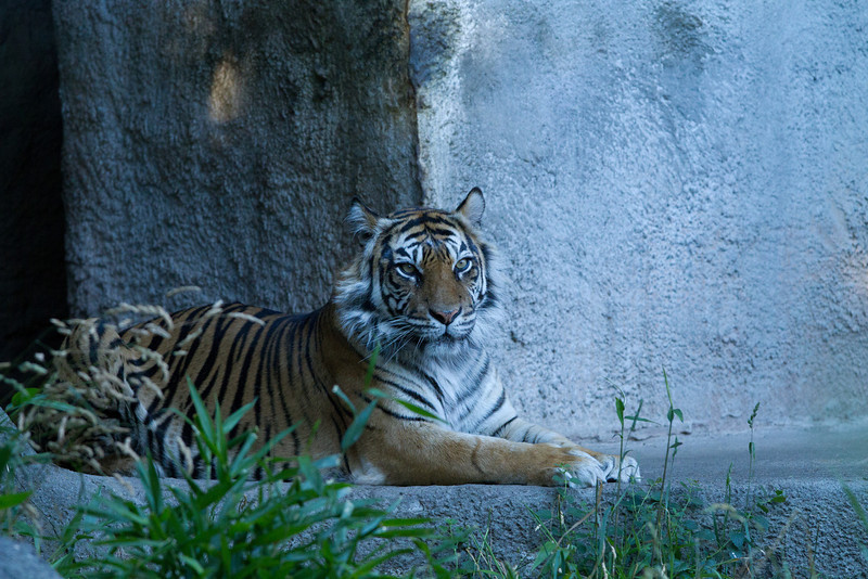 ZooClass-62.jpg