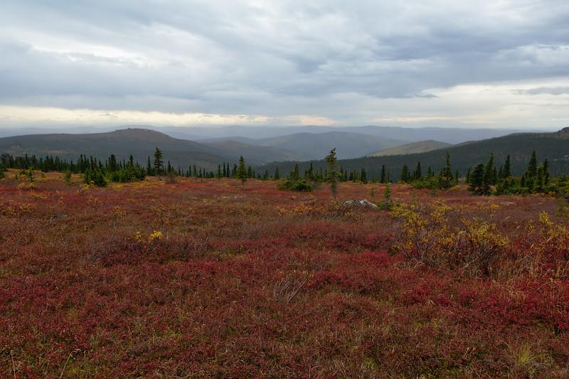 Red Tundra