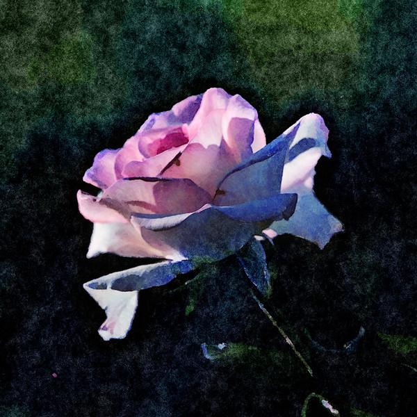 October 16 - Rose.jpg