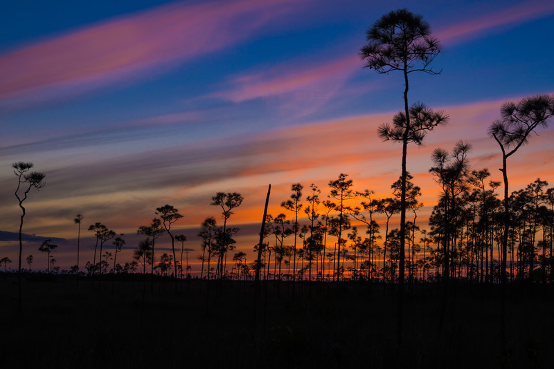 Everglades (37 of 37).jpg