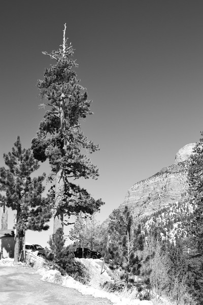 Mojave Desert & Red Rock Canyon, Vegas-CSC_2348-096.jpg