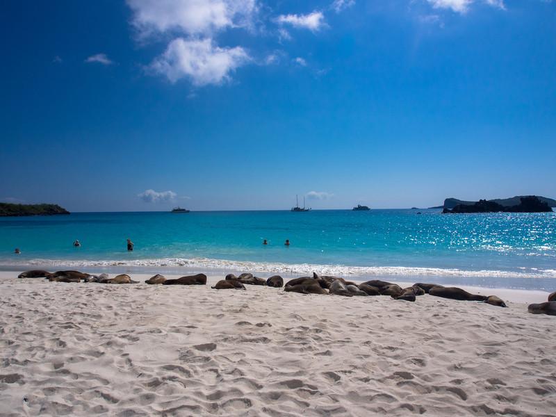 sea lion beach.jpg