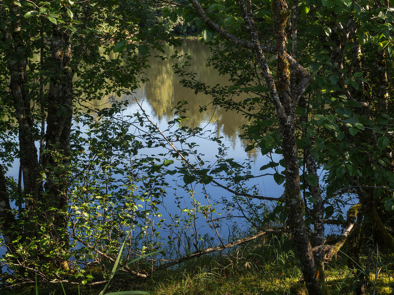 Moose lake through the Alders, August 2012.