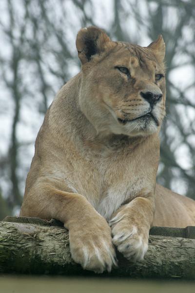 Newquay Zoo 317.jpg