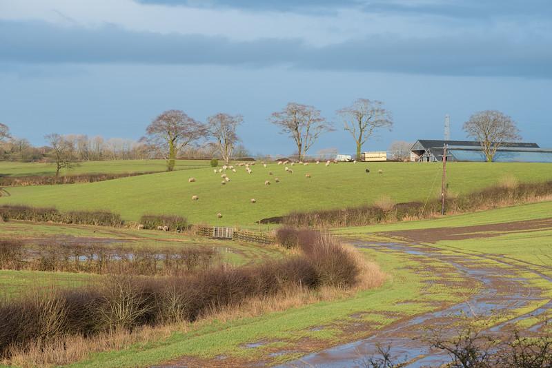 Scotland's Ayrshire Farmlands with Treelined hedges
