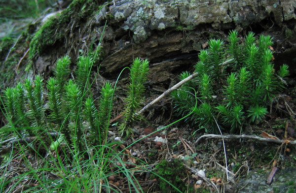 ShenandoahNP Adopt-an-Outcrop Program