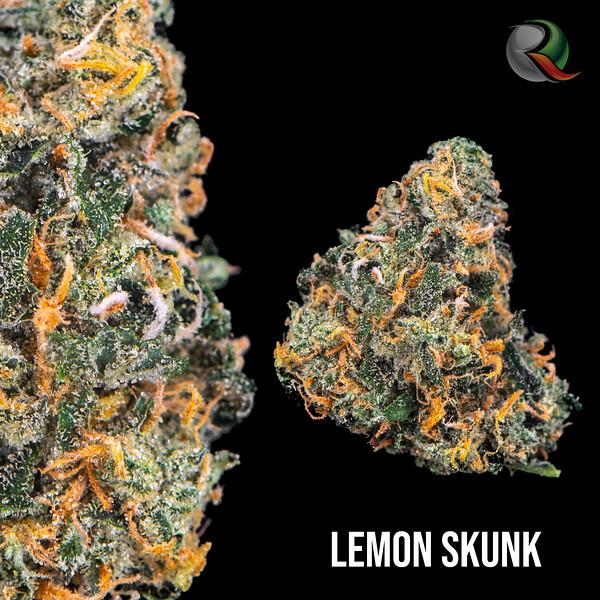 lemon skunk.jpg