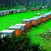 Greenpeace demuestra la urgencia de eliminar los plaguicidas tóxicos para las abejas en Europa (imagen de recurso)