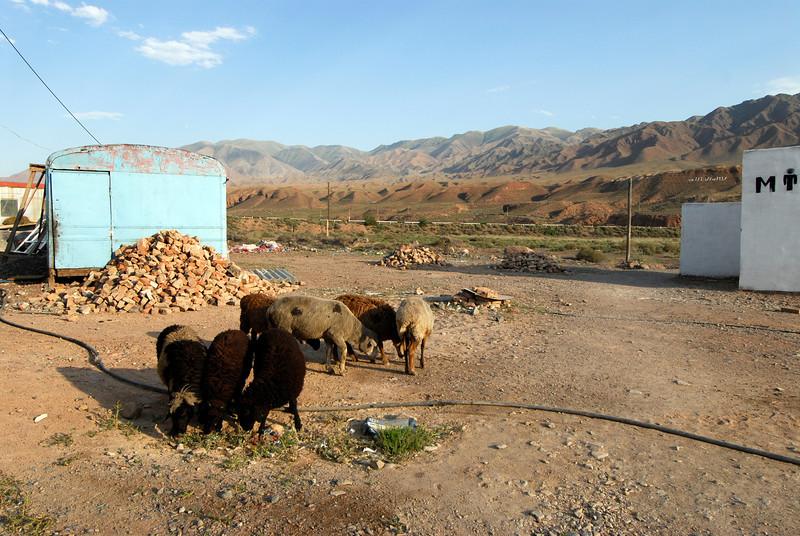 060723 2227 Kyrgystan - Lake Issuk-Kul - Drive from Airport _D _E _I ~E ~L.JPG